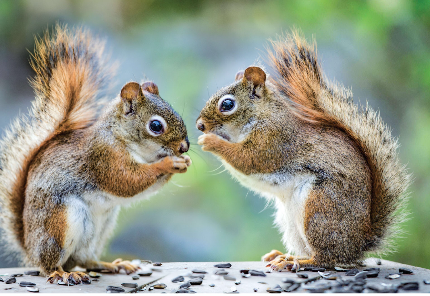 book review the secret life of squirrels a love story minds